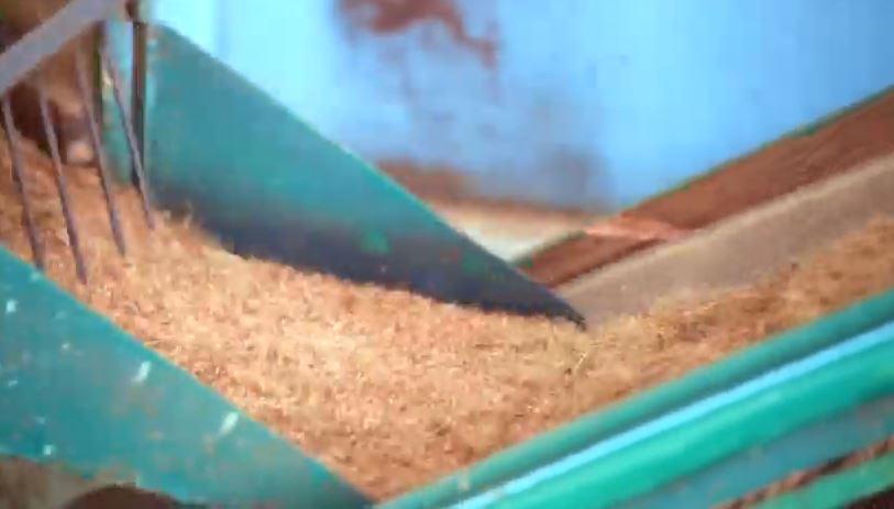 buckaroo barn australia - Rio Coco Peat Machine
