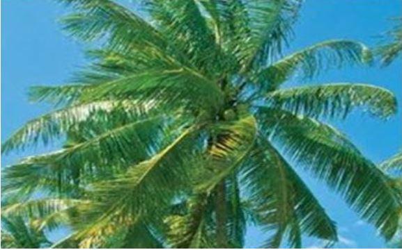 buckaroo barn australia - Rio Coconut Palms