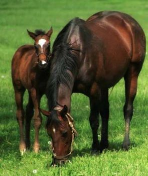 buckaroo barn australia thoroughbred foal and mum 14